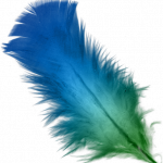 Blue_and_Green_feather